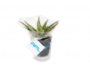 MP03V Plantes 1024x768