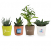 MP23 MINI PLANTE DEPOLLUANTE POR CERAMIQUE 597x768