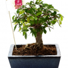 PL07 MM BONSAI FORME BOULE 597x768