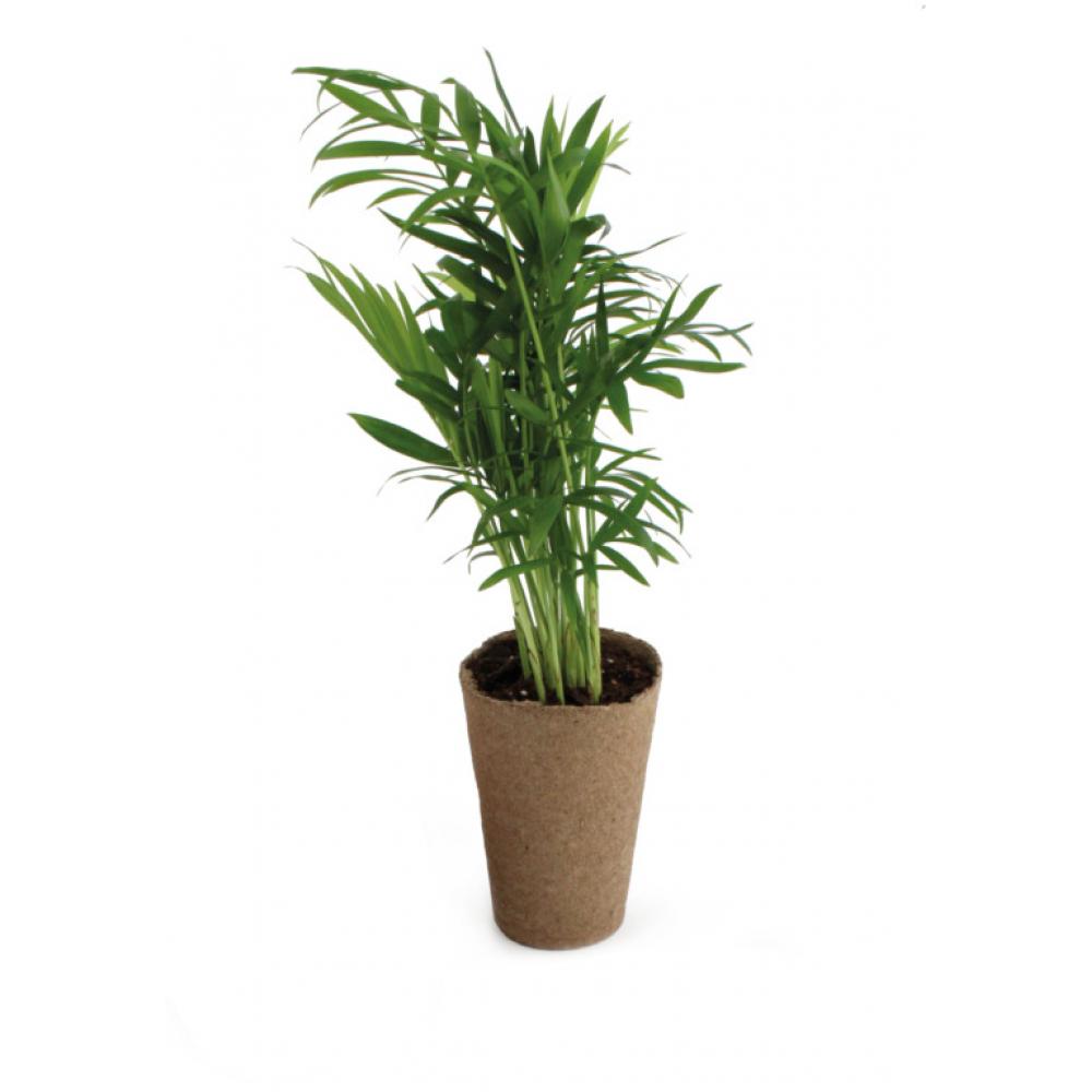 palmier kraft pot tourbe