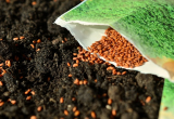 seeds petite
