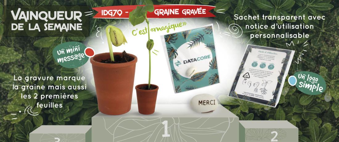 Banner-GRAINE-GRAVEE