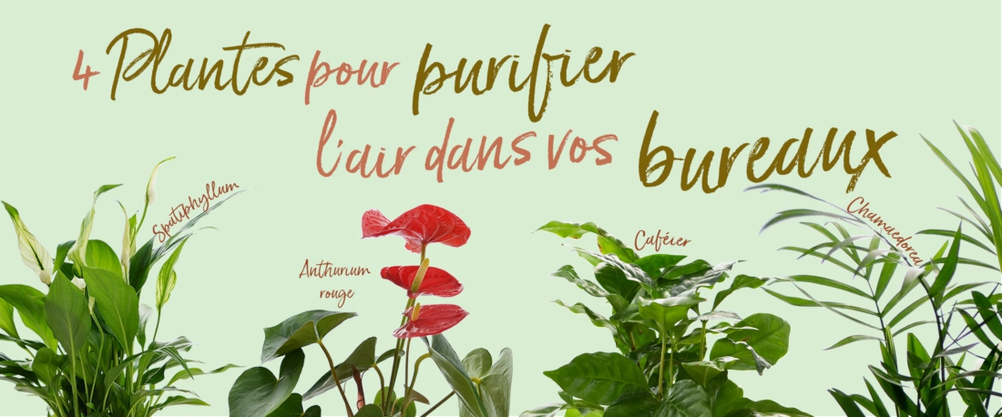 Banner site Plantes depo
