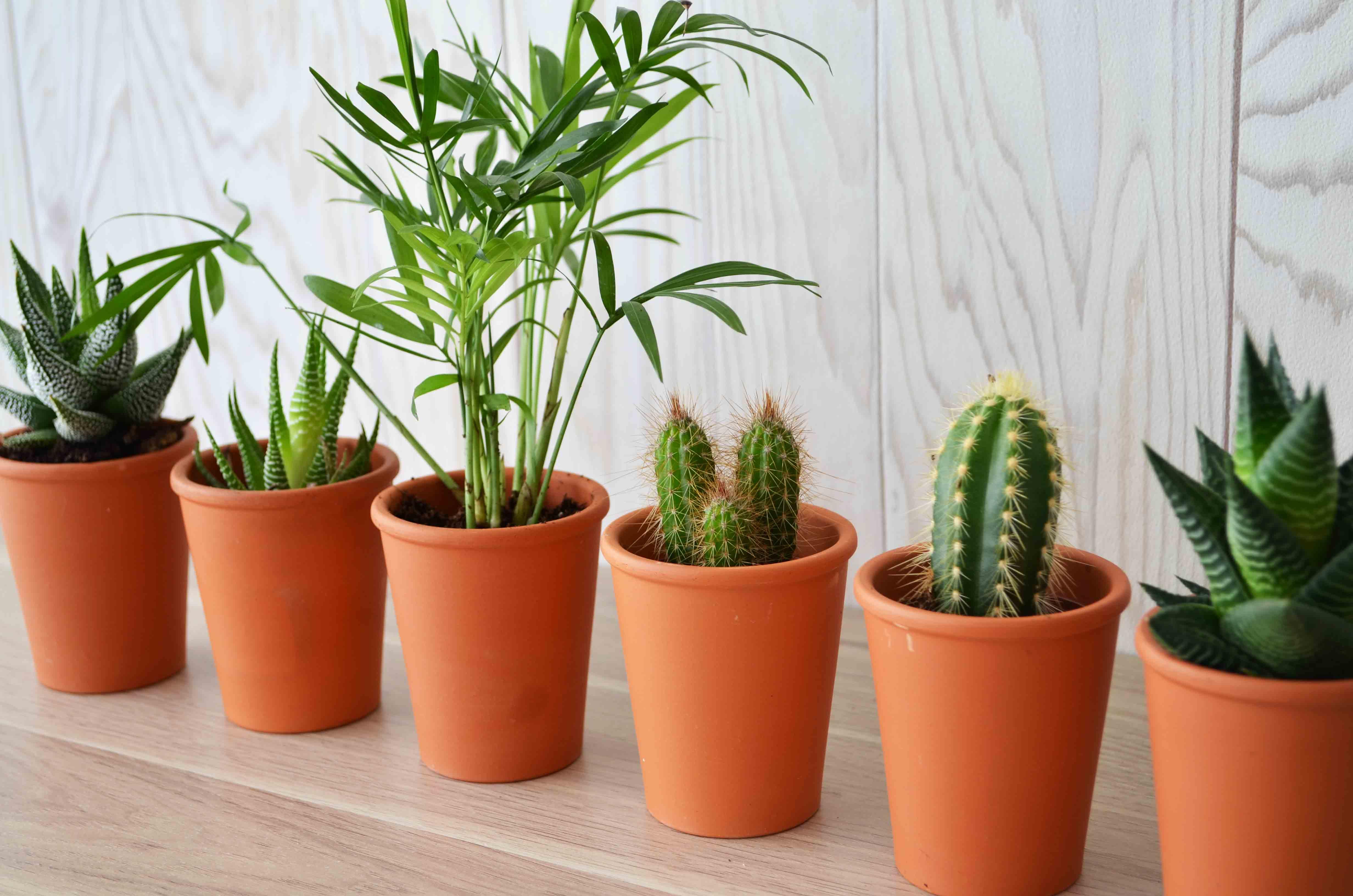 mini plante en pot terre cuite id es nature. Black Bedroom Furniture Sets. Home Design Ideas