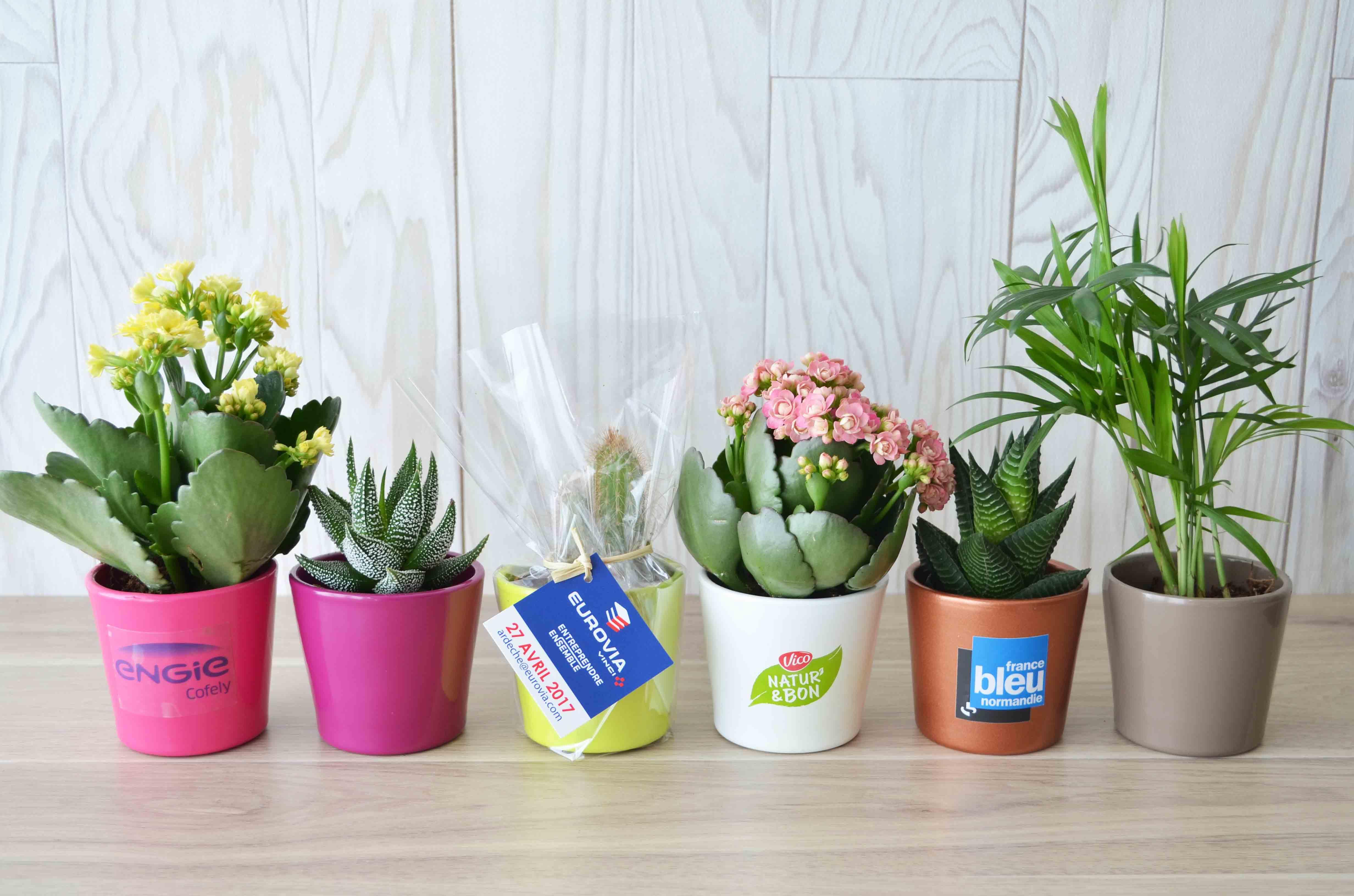 mini plante d polluante en pot c ramique id es nature. Black Bedroom Furniture Sets. Home Design Ideas