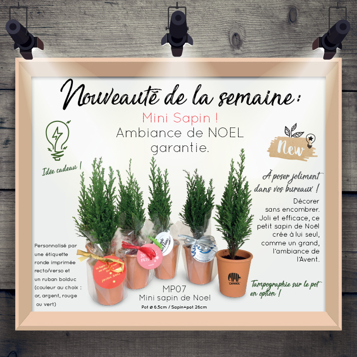 Actualité semaine MP07 Sapin Noël