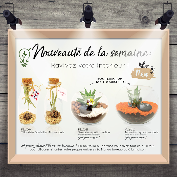 NEW BOX TERRARIUM YOURSELF