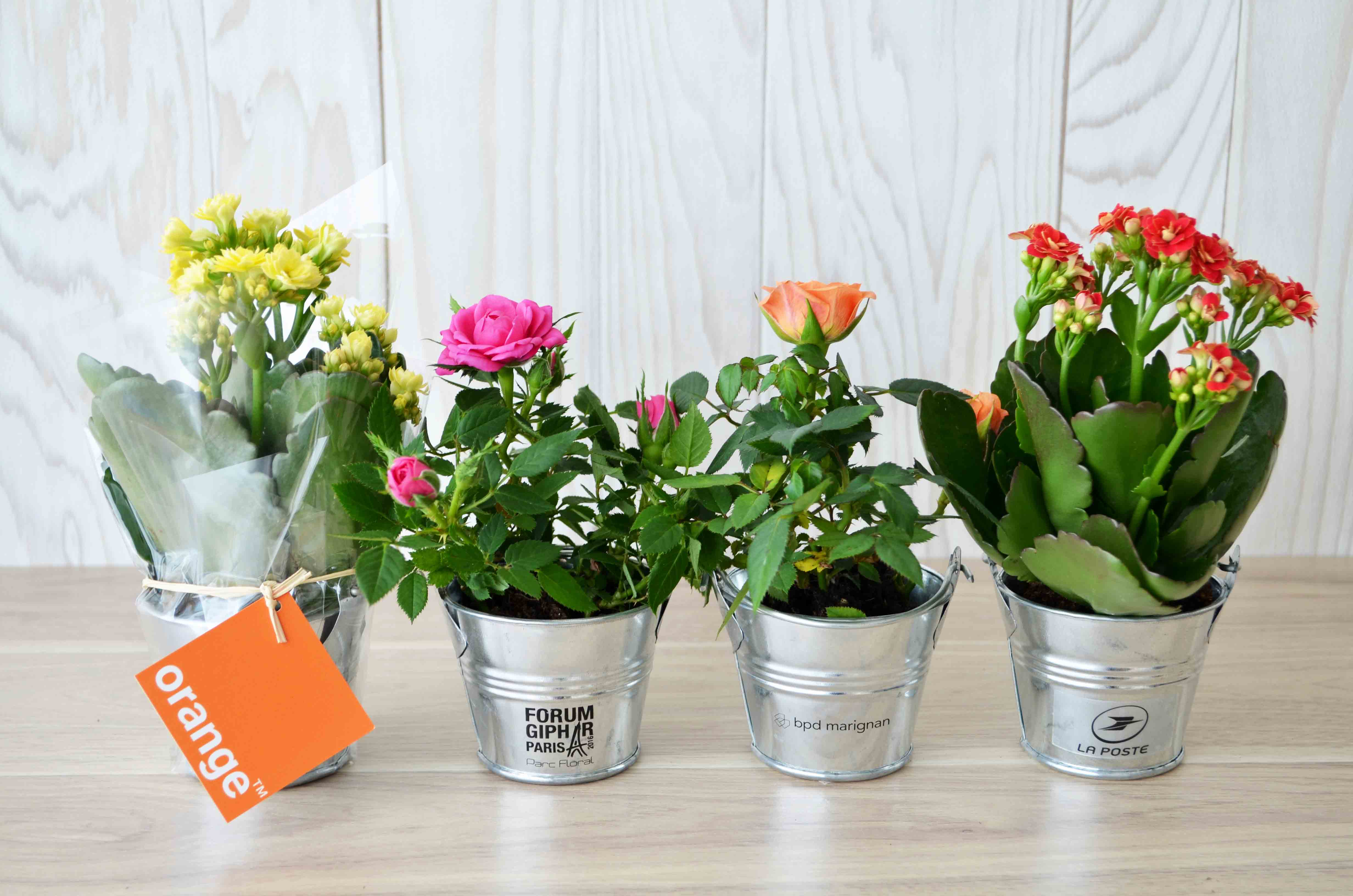 Mini plante fleurie en pot zinc id es nature - Mini rosier en pot ...