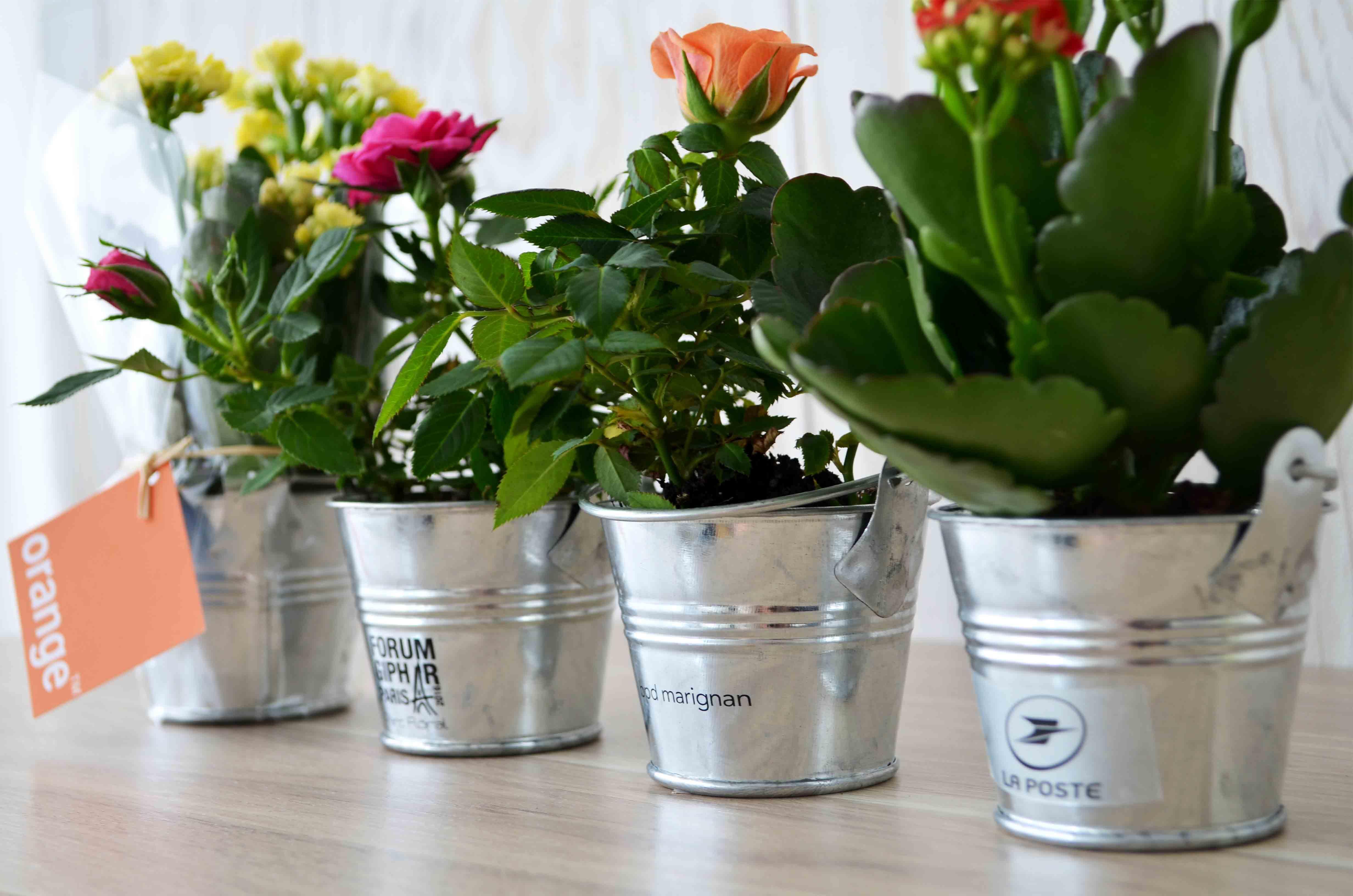 Petites Plantes Fleuries En Pot mini plante fleurie en pot zinc - idées nature