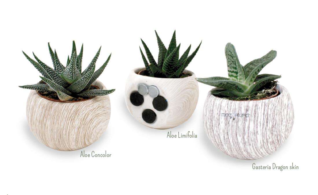 plante d polluante en pot c ramique aimant aspect bois id es nature. Black Bedroom Furniture Sets. Home Design Ideas