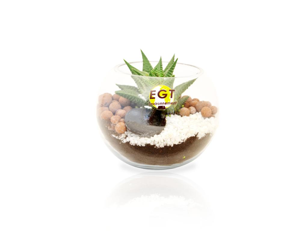 Le terrarium petit mod le id es nature - Petit terrarium ...
